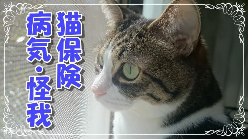 猫の保険・病気・怪我タイトル画像(窓際から外を眺める愛猫ミミ)