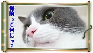 保険て何?と疑問に思う体の愛猫モコ(巻物Ver.)