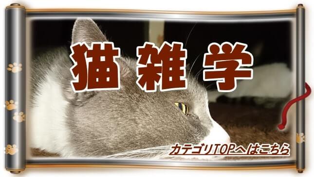 猫雑学カテゴリTOPへ(こたつに入っている愛猫たち巻物Ver.)