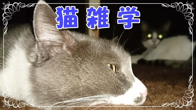 猫雑学タイトル画像(こたつに入っている愛猫たち)