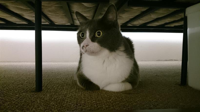 香箱座りをしている愛猫モコ