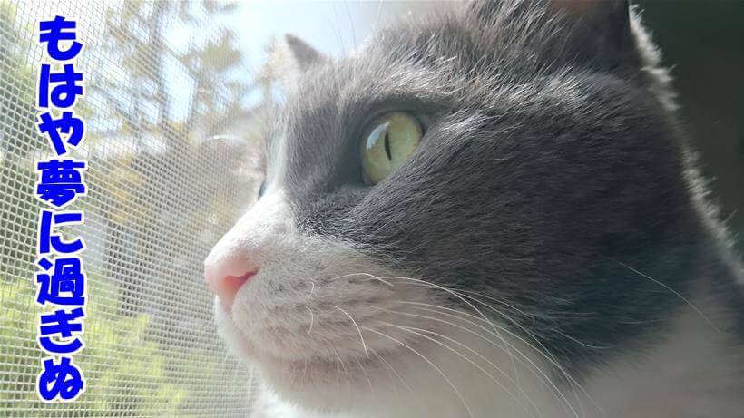 黄昏れる愛猫モコ