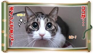 ポイントを解説しようとしている体で大きな目を輝かせている愛猫ミミ(巻物Ver.)