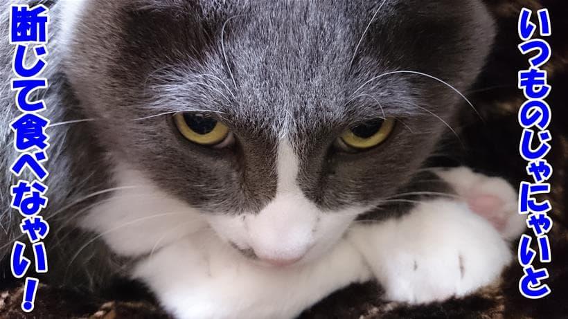 ハンガーストライキしている体の愛猫モコ