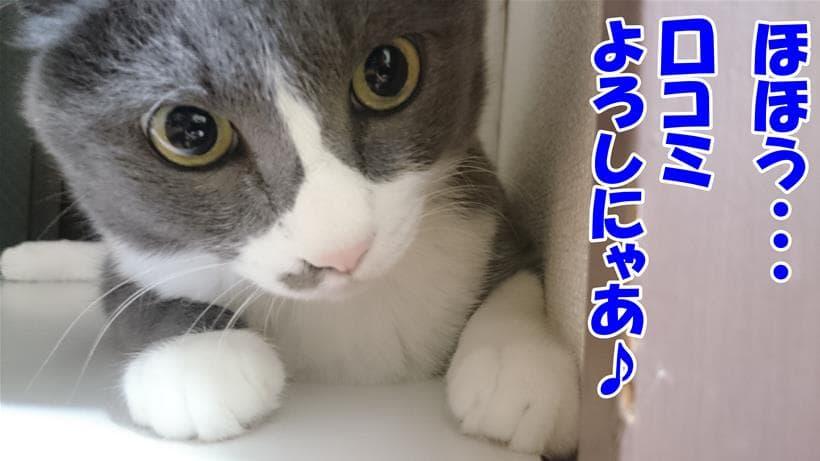 セレクトバランスの口コミが良くて感心している体の愛猫モコ