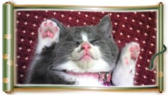 座布団の上で万歳(両手を挙げて)寝ている子猫期の愛猫モコ(巻物Ver.)