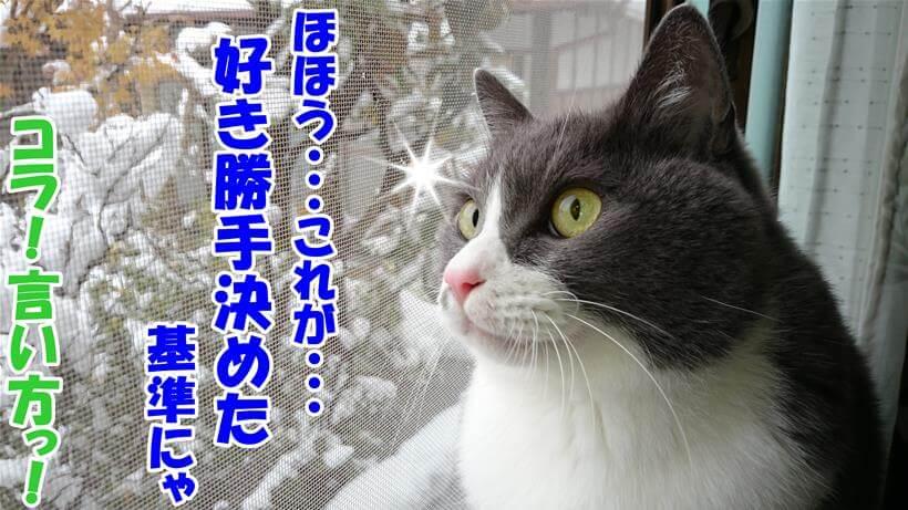 プレミアムキャットフードの比較基準を揶揄する体の愛猫モコ