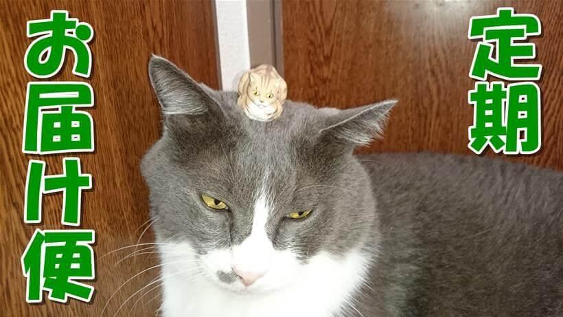 愛猫モコが頭に猫の人形を乗せている「ピュリナワン 定期お届け便」タイトル画像
