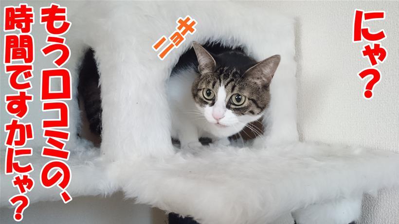 口コミの時間だとキャットタワーから出てくる体の愛猫ミミ