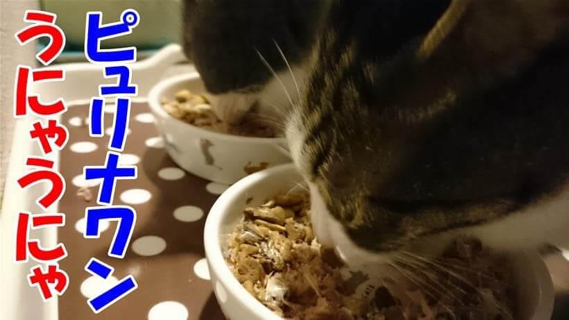 美味しそうにピュリナ ワン キャットを食べている愛猫モコとミミ