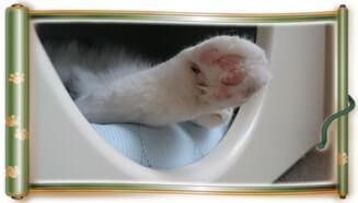 ペットハウス「オアシス」から足だけ出している愛猫モコ(巻物Ver.)