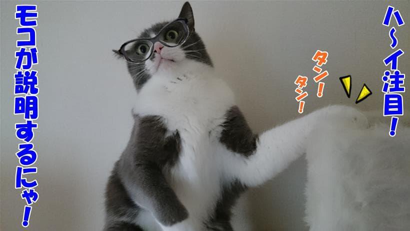 比較表について説明している体の愛猫モコ