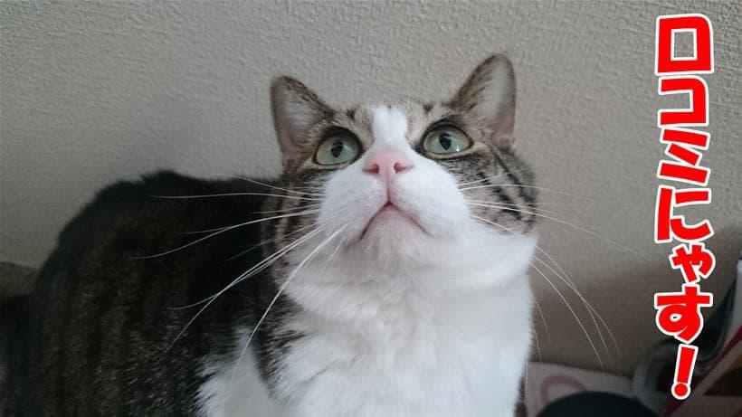 C&R プレミアムキャットの口コミを案内している体の愛猫ミミ
