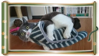 お気に入りのタオルを全身で掴み抱えている愛猫モコ(巻物Ver.)