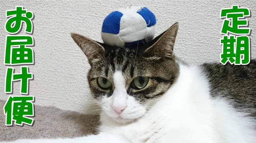 愛猫ミミの頭にいたずらしてボールを乗せている「ピュリナワン 定期お届け便」タイトル画像