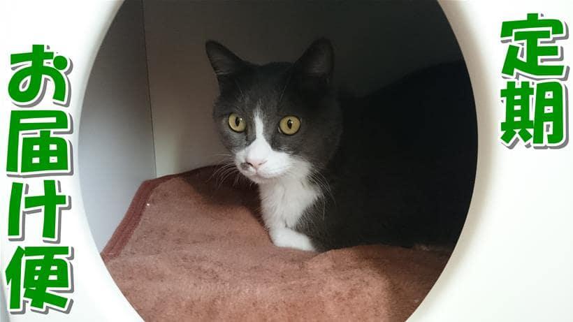愛猫モコがペットハウスで寛ぐ「ピュリナワン 定期お届け便」タイトル画像