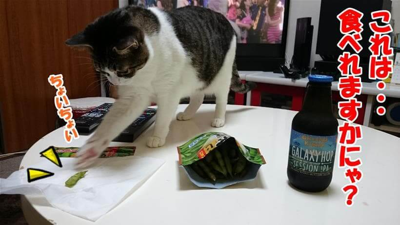 これは食べれるのか確認している体で枝豆の皮をちょいちょいしている愛猫ミミ