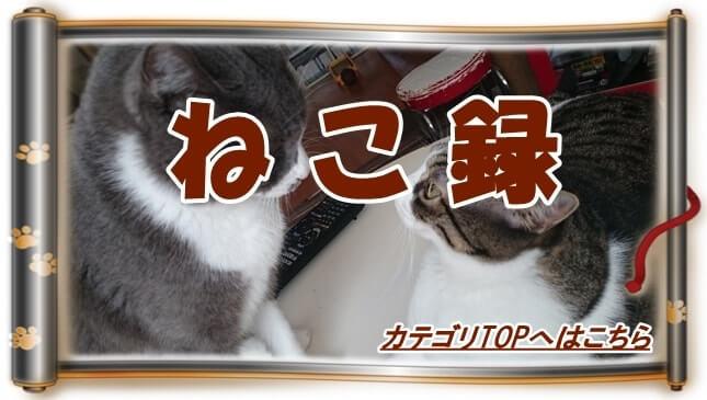 猫歴カテゴリTOPへ(向き合う愛猫モコとミミ巻物Ver.)