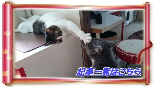 戯れている愛猫モコとミミ(ねこ録記事一覧へ)