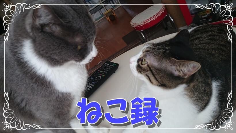 向き合う愛猫モコとミミ(ねこ録タイトル画像)