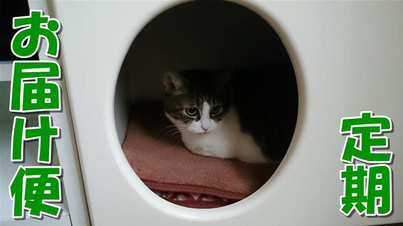 愛猫ミミがペットハウスで寛ぐ「ピュリナワン 定期お届け便」タイトル画像