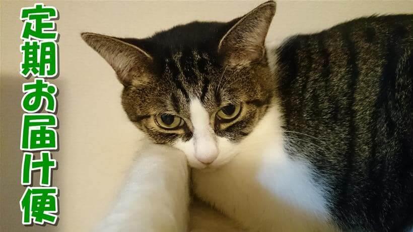 愛猫ミミがキャットタワーで寛ぐ「ピュリナワン 定期お届け便」タイトル画像
