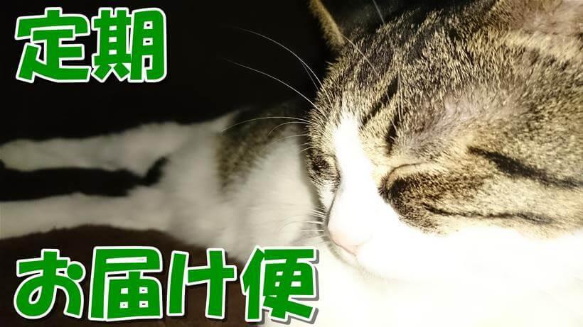 愛猫ミミがこたつで気持ち良く寝ている「ピュリナワン 定期お届け便」タイトル画像