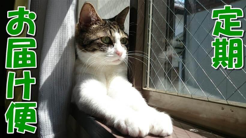 愛猫ミミがスフィンクス座りをしている「ピュリナワン 定期お届け便」タイトル画像
