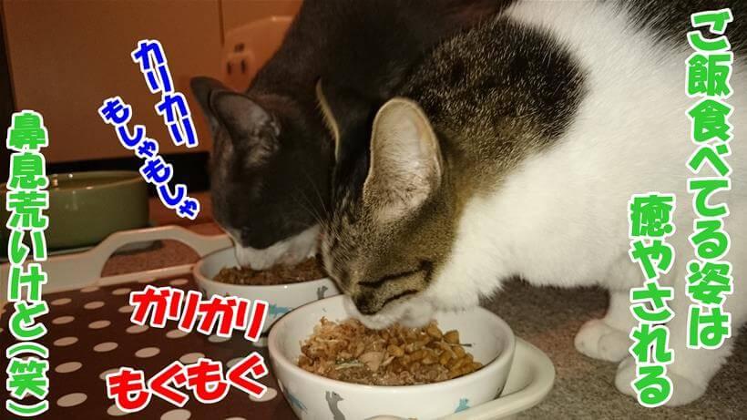 ふりかけしたキャットフード(ピュリナワン)を食べる愛猫たち
