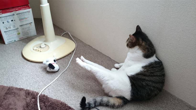 後ろ足をぴーんっと伸ばし上に挙げて座っている愛猫ミミ