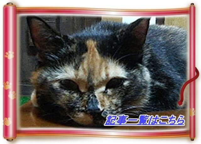 猫歴の記事一覧へ(愛猫タム巻物バージョン)