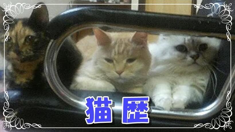 猫歴タイトル画像(愛猫ファミリー)