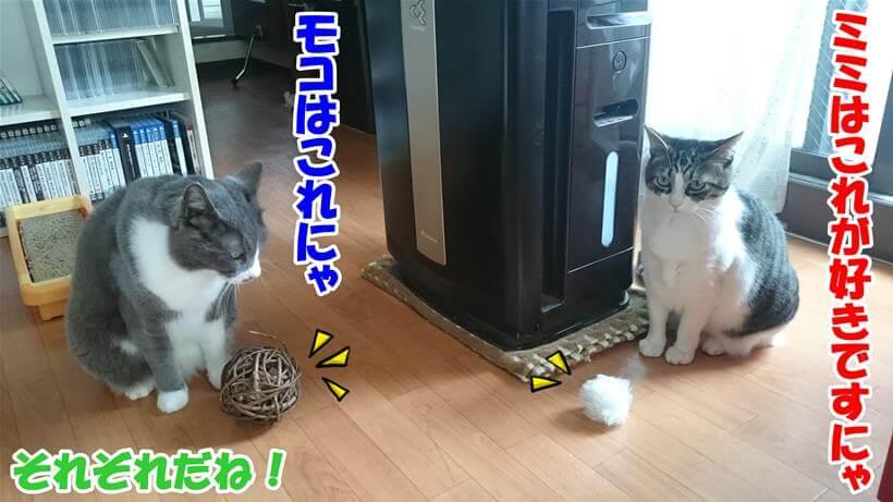 ぞれぞれ好みの違う愛猫たち