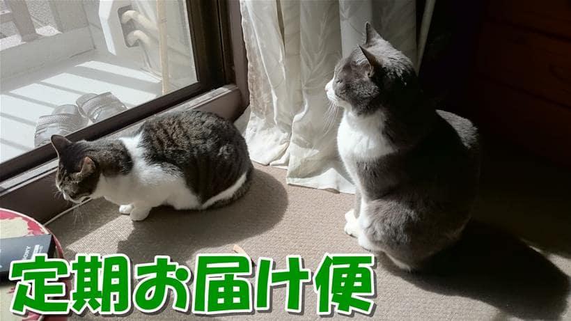 愛猫モコとミミが日向ぼっこしている「ピュリナワン 定期お届け便」タイトル画像