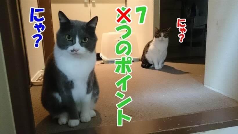 7つのポイントを不思議そうに聞いている体の愛猫たち