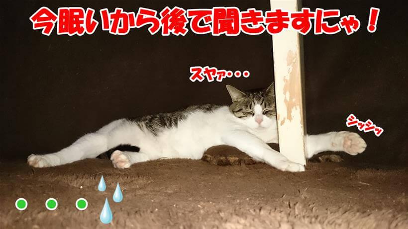 グレインフリーの話を眠いので拒否する体のこたつの中の愛猫ミミ