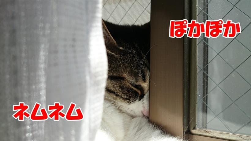 窓のサッシに顔を埋めて(挟まって?)寝ている愛猫ミミ