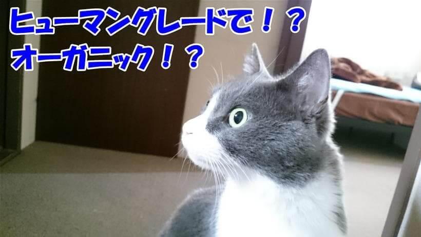 ヒューマングレードとオーガニックに驚いている体の愛猫モコ