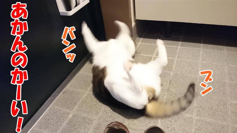 ずっこけている体の愛猫ミミ