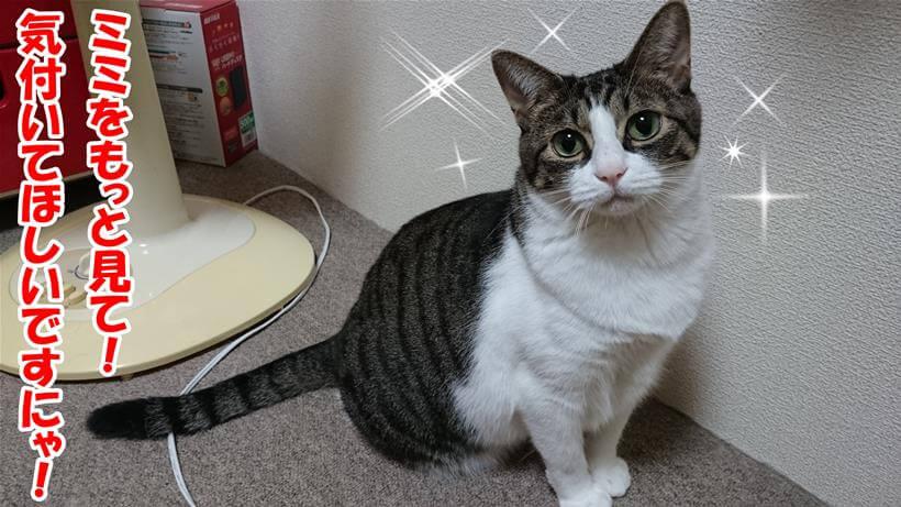 猫の腎臓病/ミミ