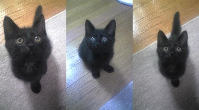 実家に来たばかり、幼少期の黒猫カイくん3連発