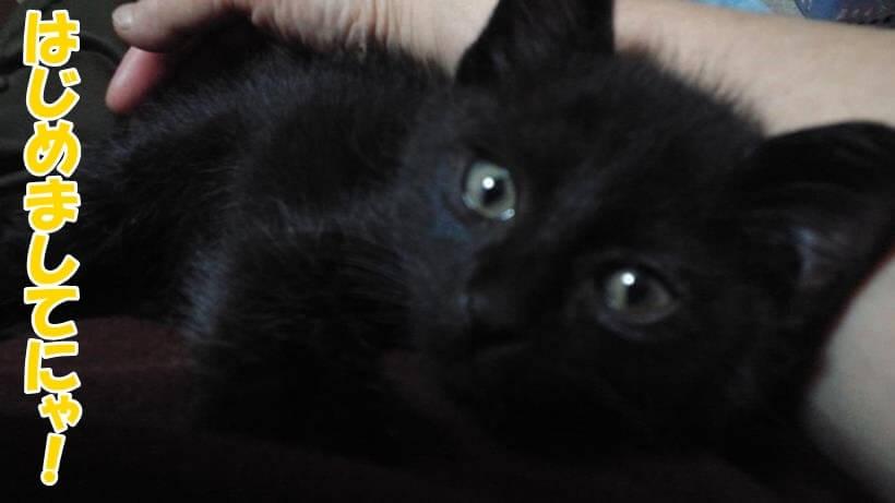 はじめまして!幼少期の実家の黒猫カイくんです。