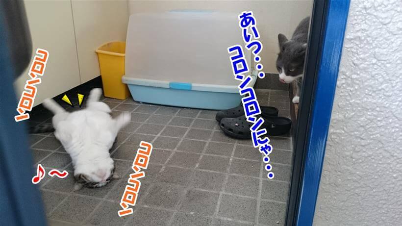 コロンコロンしている愛猫ミミを呆れている体で見ているの愛猫モコ