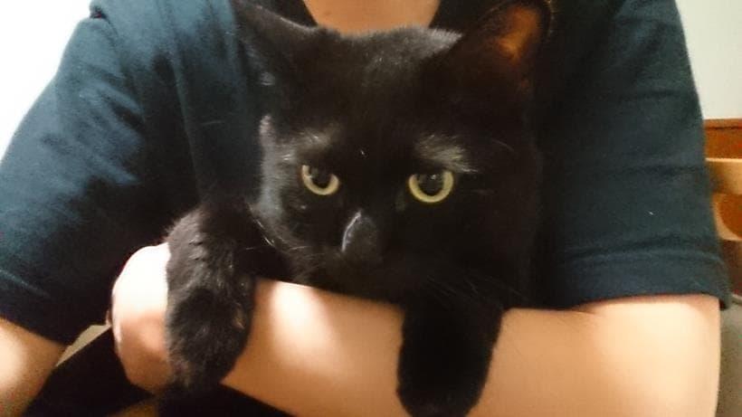 僕に抱っこされる黒猫カイくん