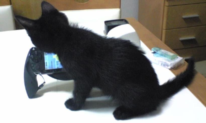 ゲーム機にいたずらする子猫時代の黒猫カイくん