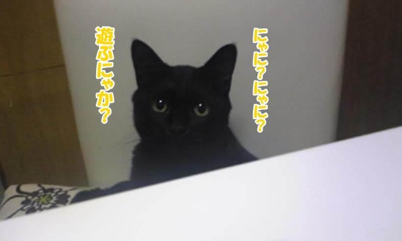 子猫時代の実家の黒猫カイくん