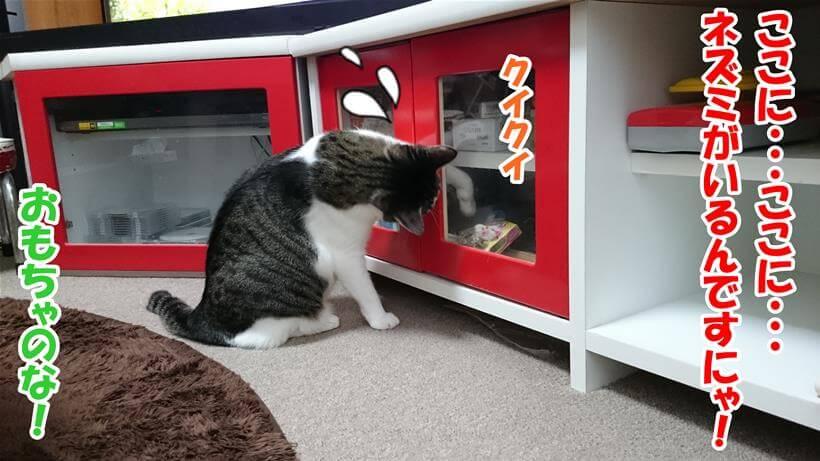 ネズミのおもちゃを取り出そうとしている愛猫ミミ