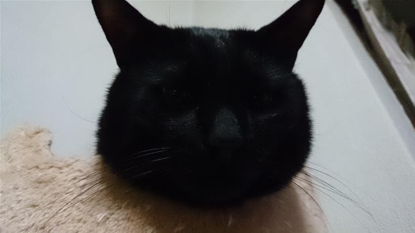目を瞑ると真っ黒な黒猫カイくん