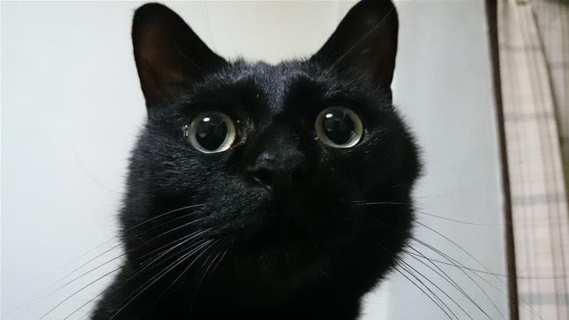 黒猫カイくん