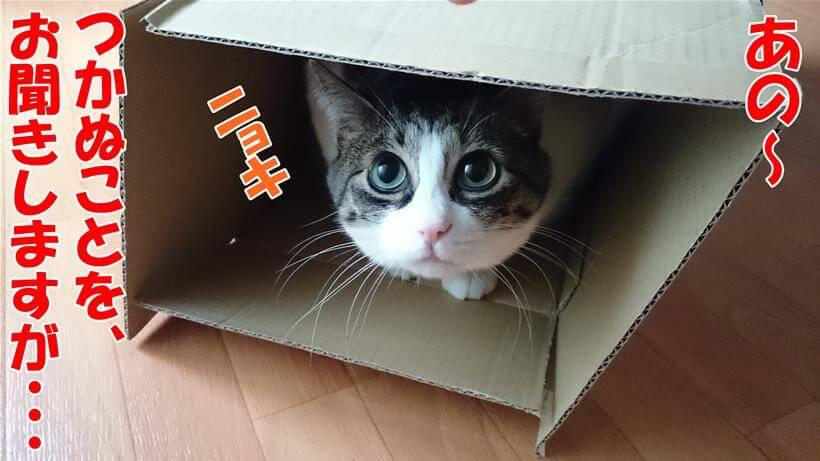 なにゆえ自分が猫と呼ばれるのかを聞きい体の愛猫ミミ